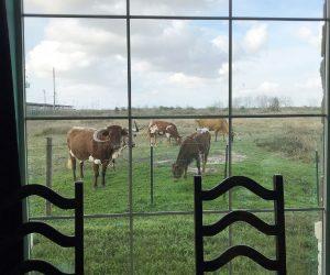 COWS-ROOM